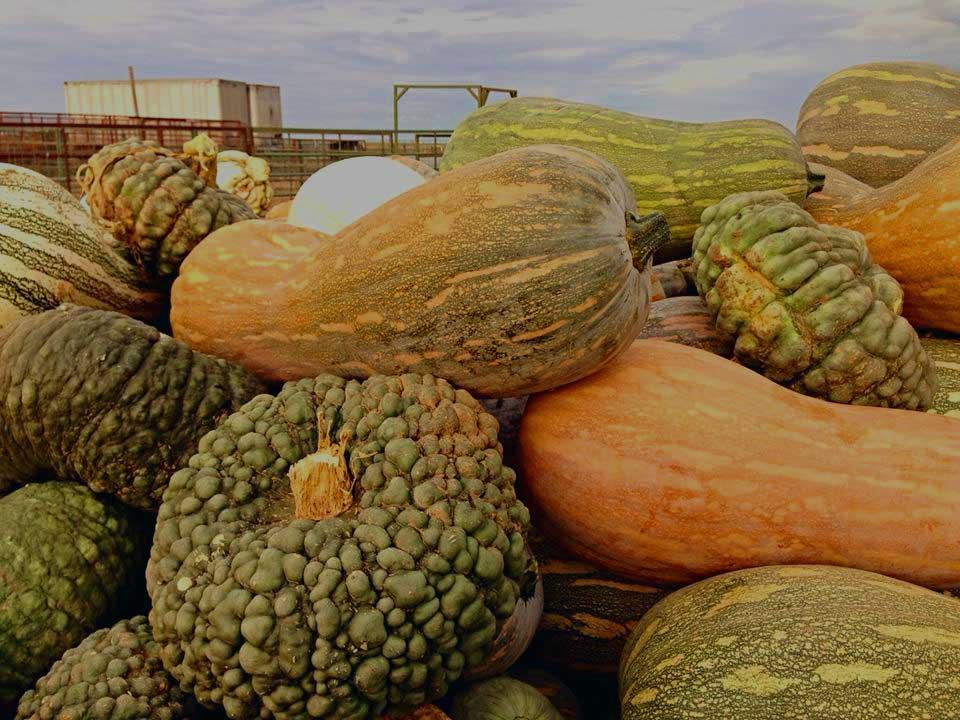 Punkin & Gourd Varieties